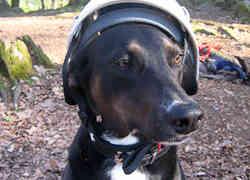 Sicherheitsausrüstung für Berghunde